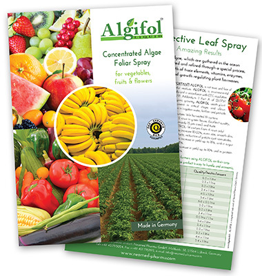 Flyer Algifol UK